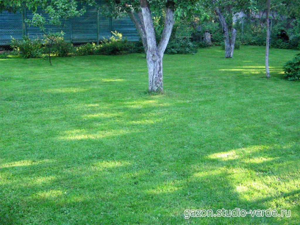 10 лучших видов газонной травы- названия и описания, с фото и рекомендациями